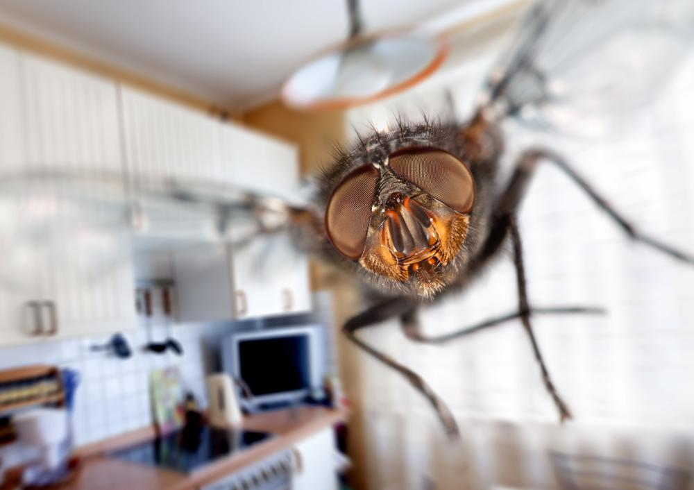 Обнаружены грибы, которые превращают мух в зомби