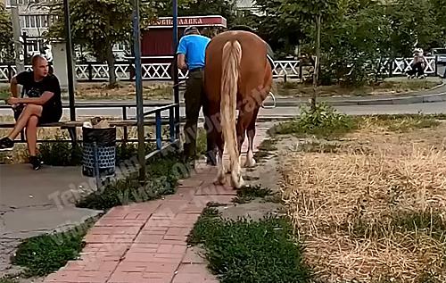 В Киеве пьяный приехал на коне в магазин за бутылкой. ВИДЕО