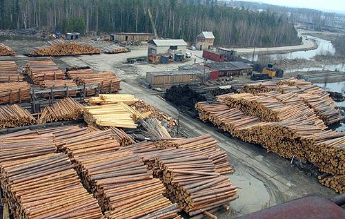 """Еколог розповів про """"законність"""" вирубки лісів у Карпатах"""
