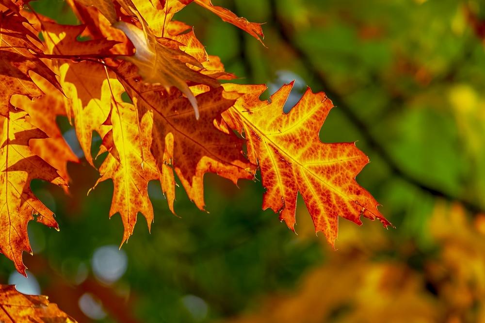 Прогноз погоди на тиждень: Осінь іде спокійно, повільно, як і належить старшій пані
