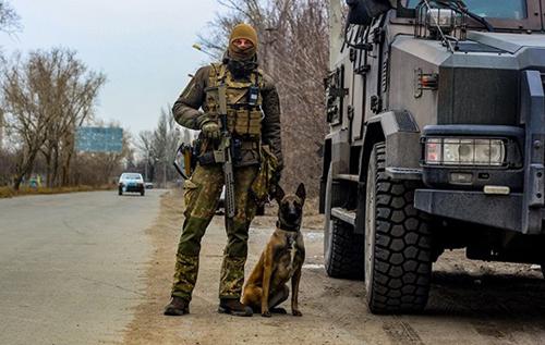 В Авдіївці службовий пес виявив схованку з боєприпасами