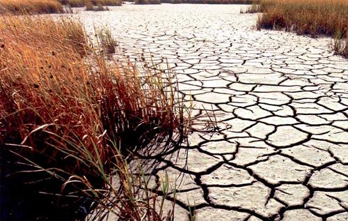 В Крыму подсчитали убытки от засухи и обвинили в этом Украину