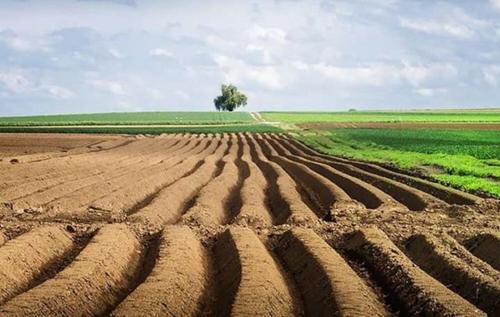 Запуск ринку землі: в Мін'юсті порадили, як уберегти свою ділянку від шахраїв
