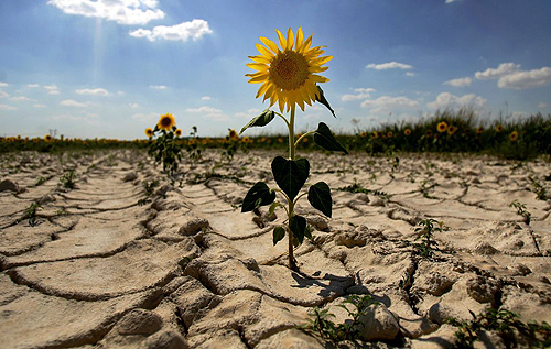 Украина вошла в топ-5 стран мира с наибольшим риском засухи