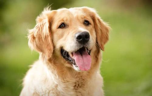 Суд Бразилии признал право собак на компенсацию морального вреда