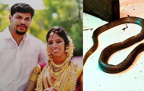 Подбросил в постель кобру: в Индии мужчина получил двойное пожизненное за убийство жены