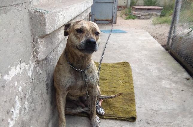 Жарт, який став реальністю: Мін'юст виставив на продаж породистих собак боржників. ФОТОФАКТ