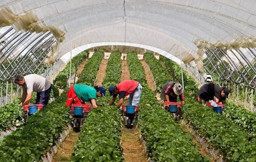 """""""Ця криза показала, наскільки українці є незамінними у сільському господарстві європейських країн"""", – заступник агроміністра Чехії. ВІДЕО"""