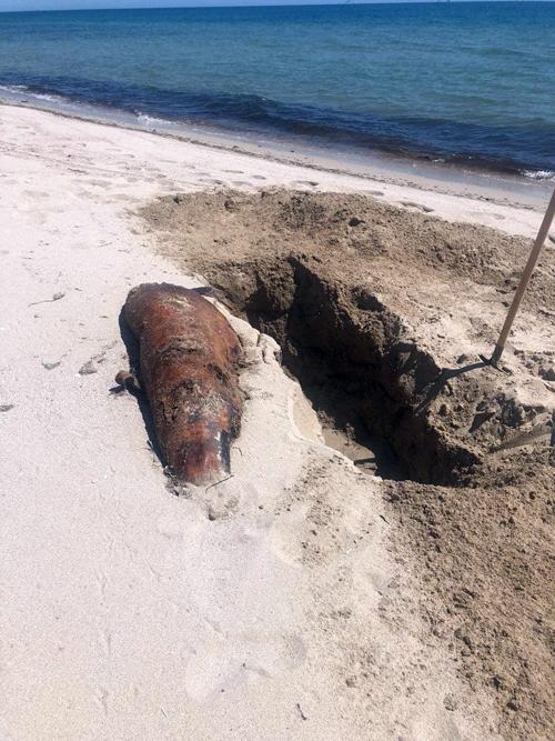 В оккупированном Крыму прямо на пляжах закапывают трупы дельфинов
