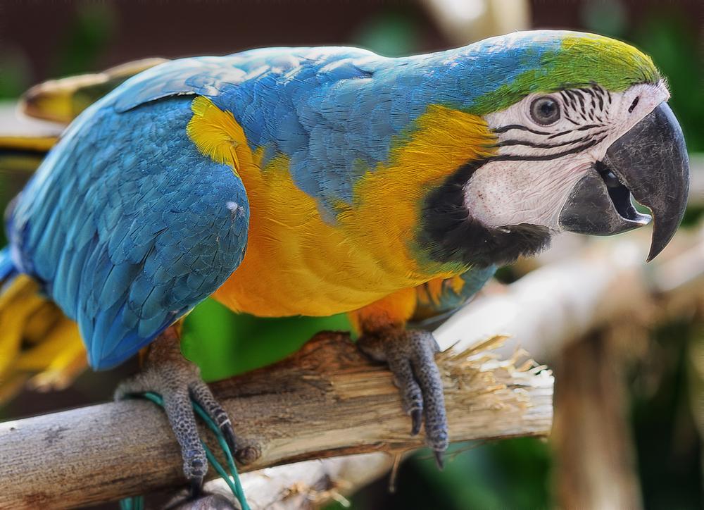 Зачем индейцы пустыни Атакама мумифицировали попугаев?