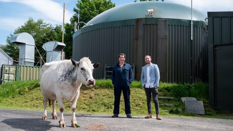 Британец майнит криптовалюту на энергии из коровьего навоза
