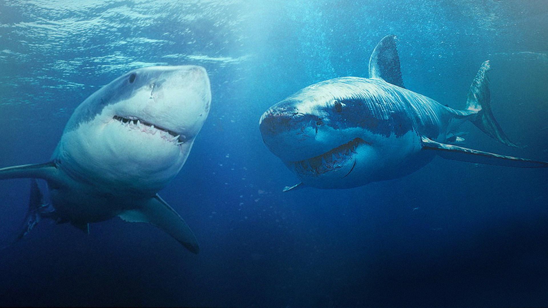 Какие акулы наиболее опасны и почему им тоже нужна защита?