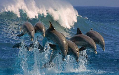 Не милые и не добрые: некоторые особенности дельфинов, о которых редко рассказывают