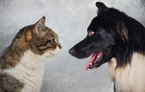 Кто умнее – кошки или собаки: ученые попытались сравнить интеллект животных