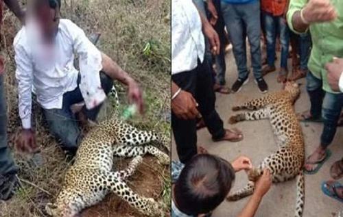 Индиец убил леопарда голыми руками ради спасения жены и дочери. ВИДЕО