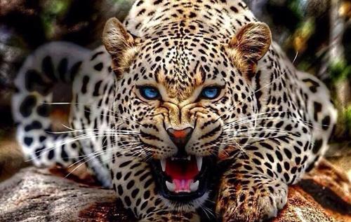 В Индии на 55-летнюю женщину напал леопард. Она отбилась от него тростью. ВИДЕО