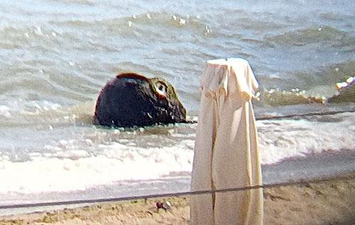 Возле городского пляжа Черноморска из моря достали неразорвавшийся снаряд. ФОТО