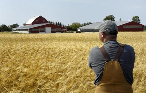 """В """"Слузі народу"""" назвали очікувані ціни за гектар землі. ВІДЕО"""