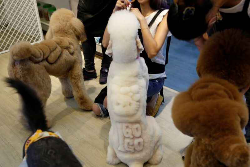 Картинки по запросу Вся правда из блогосферы » Новости блогосферы » Этот тайваньский парикмахер делает самые нестандартные стрижки для животных