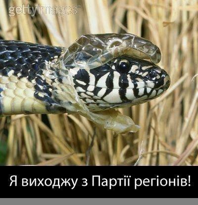 Минобразования пытается отсудить недвижимость, украденную экс-министром Табачником, - Квит - Цензор.НЕТ 6353