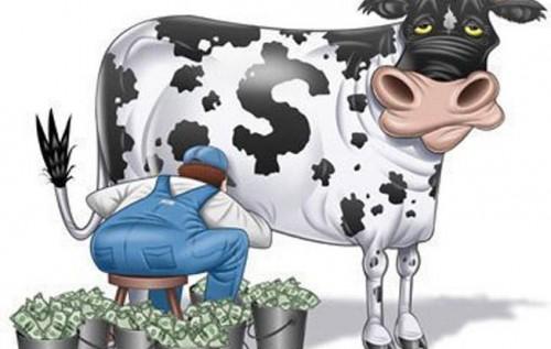 коровы дойные фото
