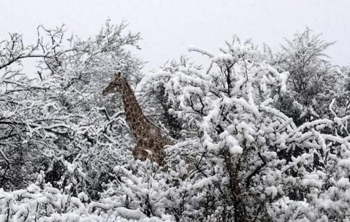 Картинки по запросу сніг у ПАР