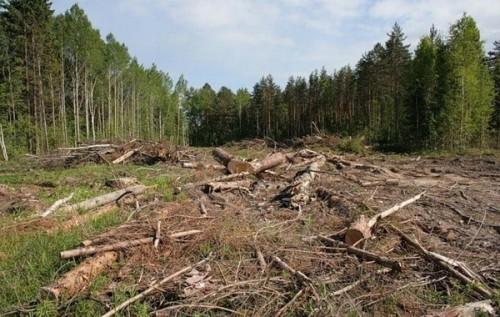 На Івано-Франківщині площі вирубки лісів збільшились на 10%