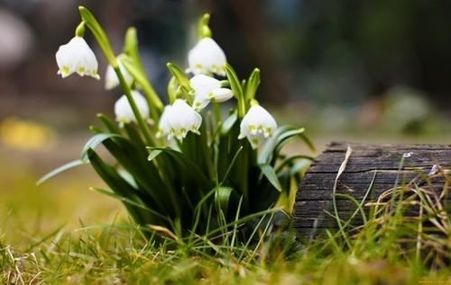 Екоінспекція закликала прикарпатців не купувати червонокнижні квіти і попередила про штрафи