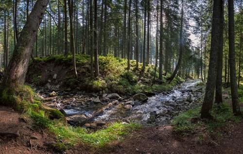 Результат пошуку зображень за запитом карпатский лес