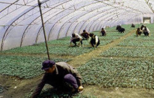 складывались крупные землевладельцы сдают свои землю в аренду фермерам подождал