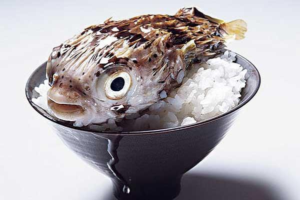 как готовить рыбу фугу