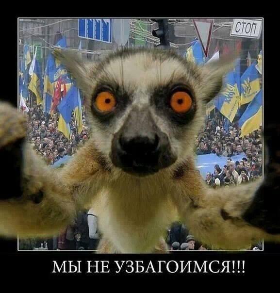 Запорожская самооборона объявила мобилизацию: В город могут заехать пророссийские боевики - Цензор.НЕТ 2144