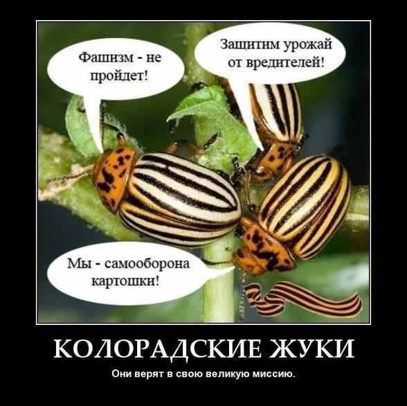 Анекдот колорадскому жуку