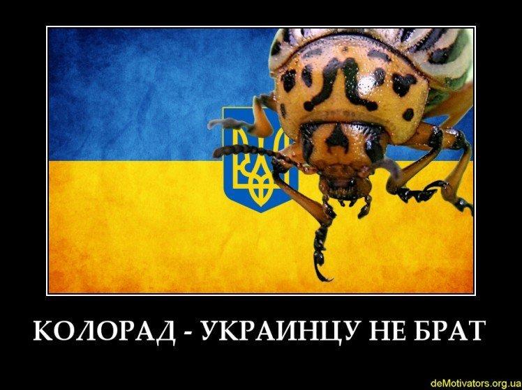 Яценюк проведет выездное заседание правительства в Харькове - Цензор.НЕТ 2566