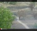 Русские диверсанты в Мариуполе ранили 15-летнего подростка на велосипеде. ВИДЕО